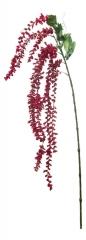 Амарантус новый красный