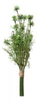 Аллиум кустовой зеленый в стиле прованс