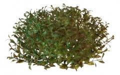 Искусственные зеленые листья